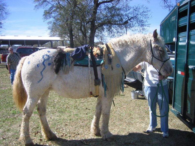 horse painted and tacked up in Native American tack.