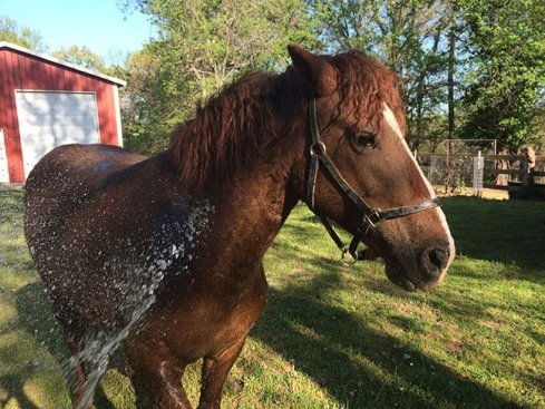 Some horses love to be hosed off so much that they don't need to be tied