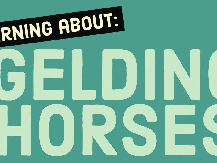 gedling horses