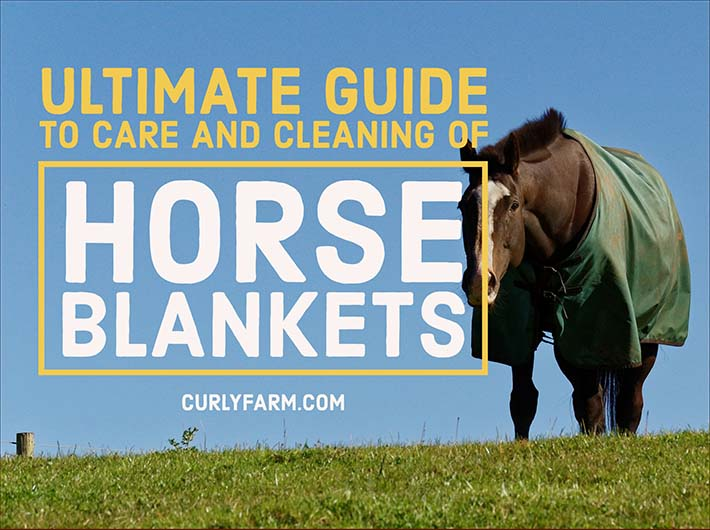 Ultimate guide to using, cleaning, storing, and caring for winter horse blankets