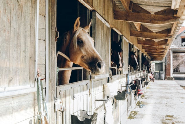 horses on stall rest are prone to boredom and developing vices