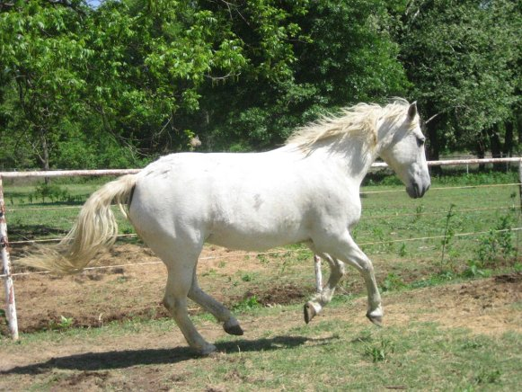 Grooming Tips to Keeping White and Grey Horses Bright, Clean
