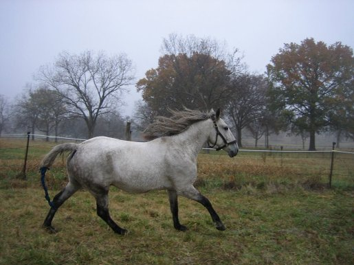 What is a Ewe Neck in Horses? Recognizing and Correcting