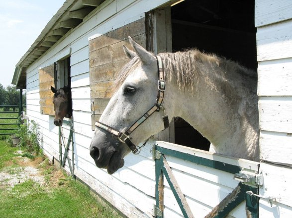 breezy and open indoor stalls, preferably with a box fan, are a good way to help horses cope with high temperatures.