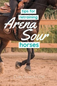 Arena Sour: Working with Horses that Refuse to Enter an Arena