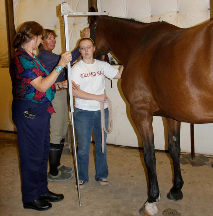 measuring a horse with a specially designed measuring stick