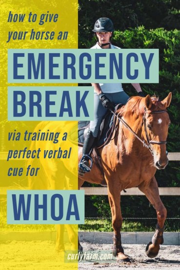 increase horse, rider, and farm safety by training your horses to stop immediately on cue