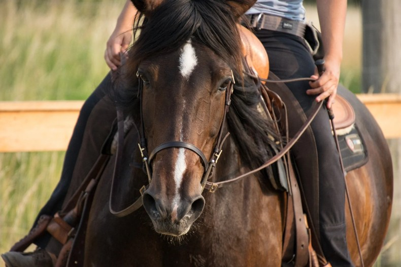 Checking tack and equipment for potential discomfort is an important first step
