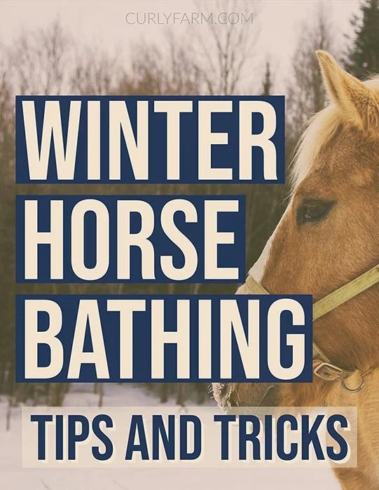 Tips for bathing, spot cleaning, and deep-grooming your horse in the winter months