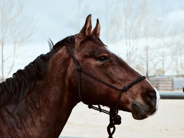 A rope halter can be a gentler alternative to a stud chain