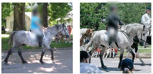Comparison of a horse with an ewe neck before starting training compared to after several seasons of conditioning
