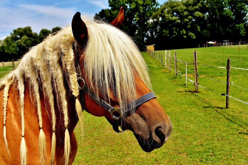 how to help a mane grow and stay thick using pasture braids