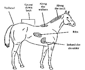 Diagram Of Horses Withers  Free Car Wiring Diagrams