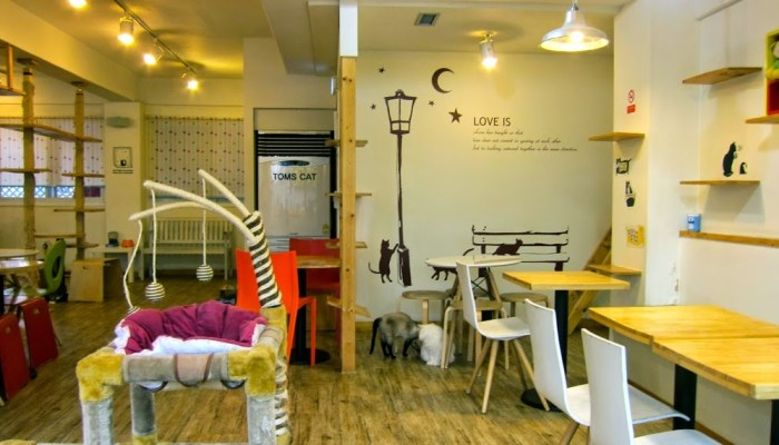 Tom's Cat Cafe Seoul