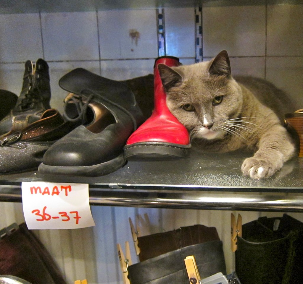 Cat guarding the goods in a thriftshop, Haarlem.