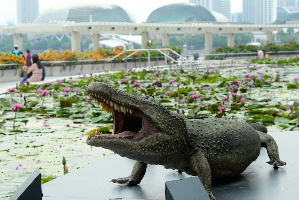 Croc in lily pond