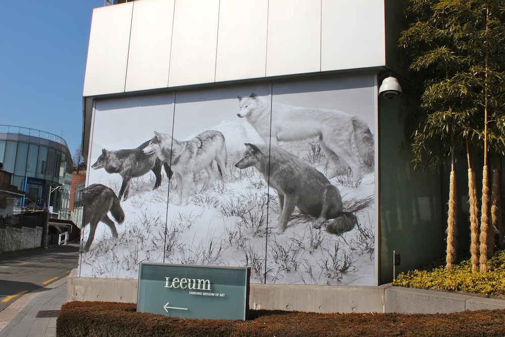 Picture of wolves in the snow at Leeum Seoul  curlytraveller.com