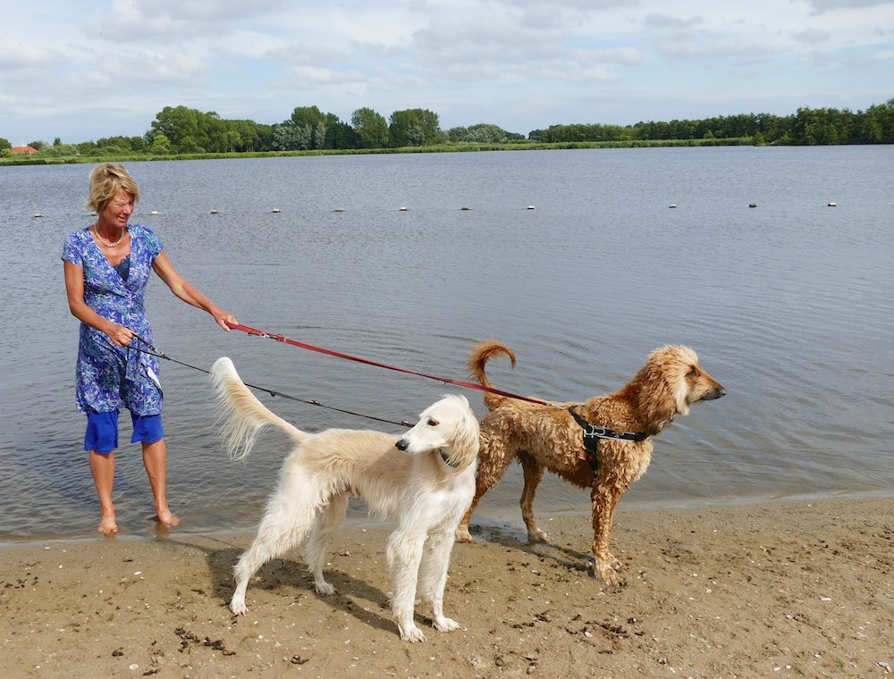 A saluki and a whippet at the Veerplas |curlytraveller.com