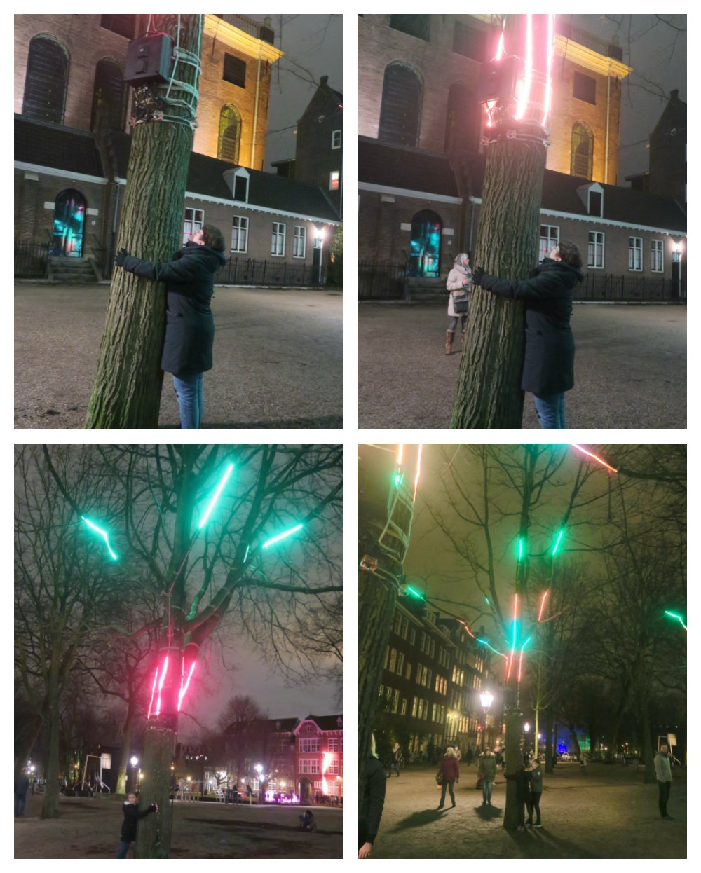 Tree Hugger, part of Amsterdam light Festival |curlytraveller.com