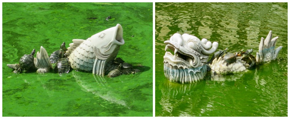 Turtles on figurines in temple pond |curlytraveller.com