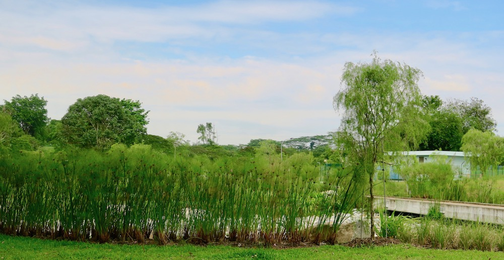 Pretty grasses along our walk in West Singapore |curlytraveller.com