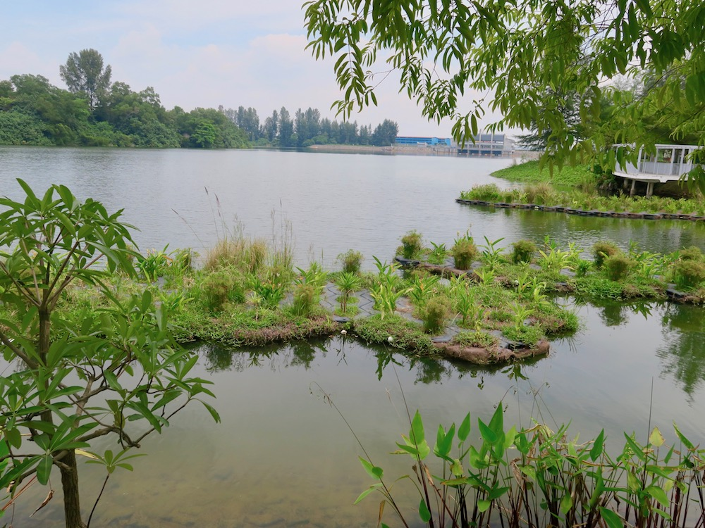 Lovely floating gardens in Punggol Singapore |curlytraveller.com