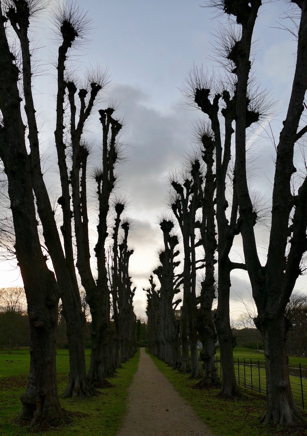 Tree-lined path at Elswout |curlytraveller.com