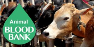 India's first blood bank for Cattle to come up in Odisha
