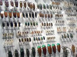 India's 1st Insect Museum Opened in Tamil Nadu