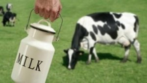 Milk Production Up 20% in 2014-2017