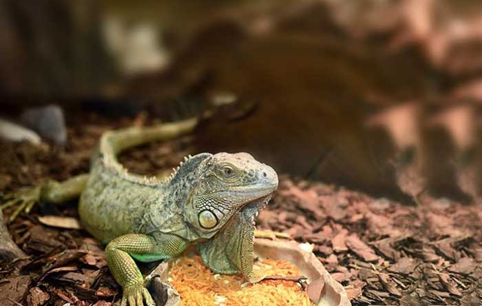 Calcium Substrates for reptile