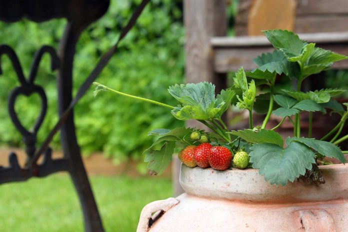 How to growing fruit in containers