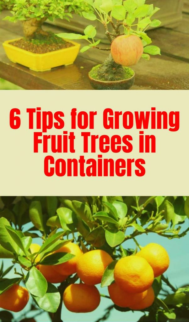 Tips growing fruit trees in containers ideas