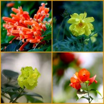 flower-col-4