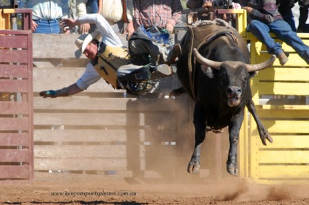 Bull Ride Bights the Dust