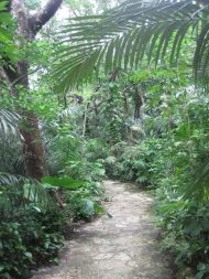 Yaeyama Palm Colony, 米原のヤエヤマヤシ群落, Yonehara, Palmenwald, palm tree, tropical island, Tropeninsel, jungle path, Ishigaki, 石垣島, Okinawa, 沖縄県, Japan