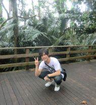 Yaeyama-Palmen-Kolonie (Iriomote-Ishigaki National Park) ☆ Yaeyama palm colony (Iriomote-Ishigaki National Park)