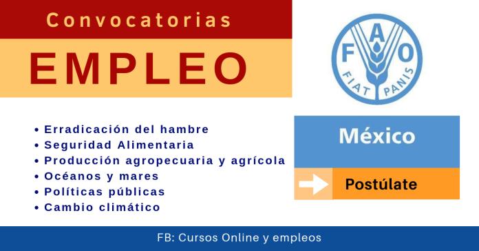 FAO México vacantes de empleo