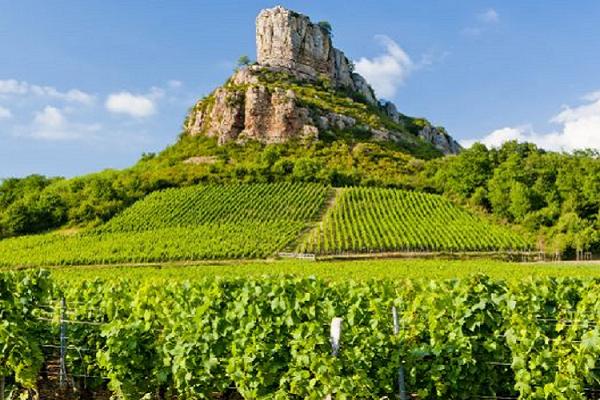 De wijnwereld SWEN 2