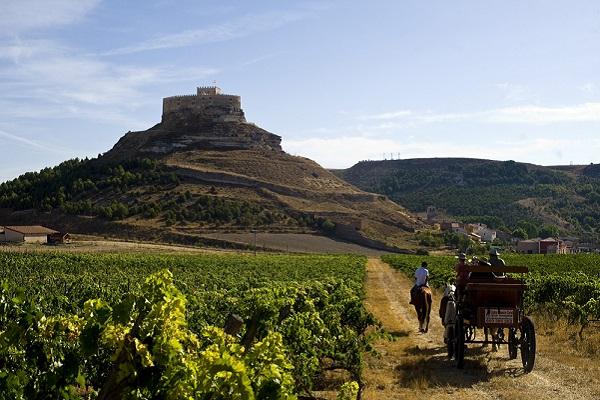 Wijnworkshop Ribera del Duero