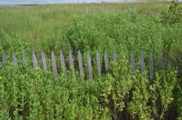 Sea Rim State Park beach fense