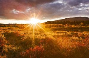 meadow-sunrise