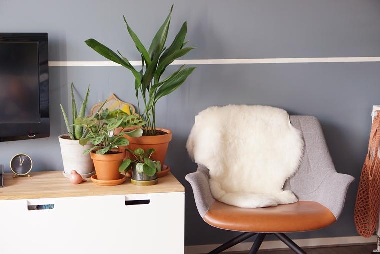 diervriendelijke planten tips 1 - Home | Tips voor kind- en diervriendelijke planten