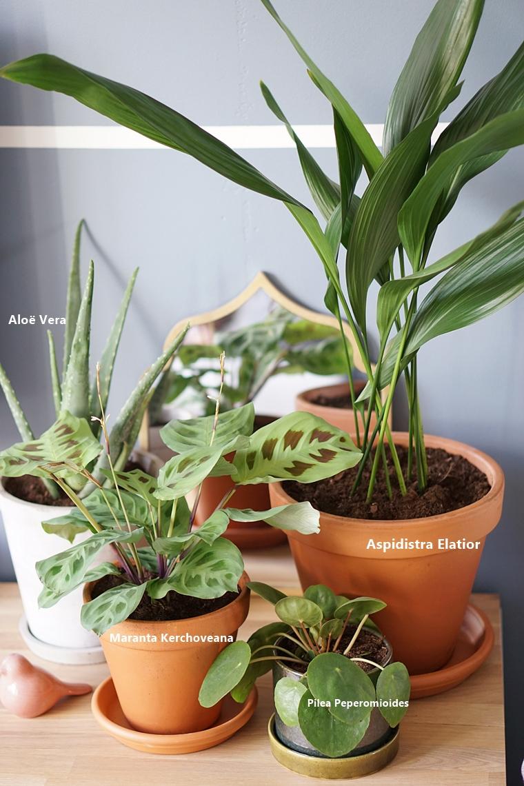 diervriendelijke planten tips 5 - Home | Tips voor kind- en diervriendelijke planten