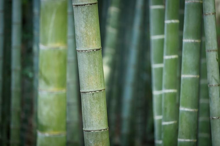 bamboe kleding voordelen bamboo basics 1 - Fashion | De voordelen van bamboe kleding (+ webshop tip)