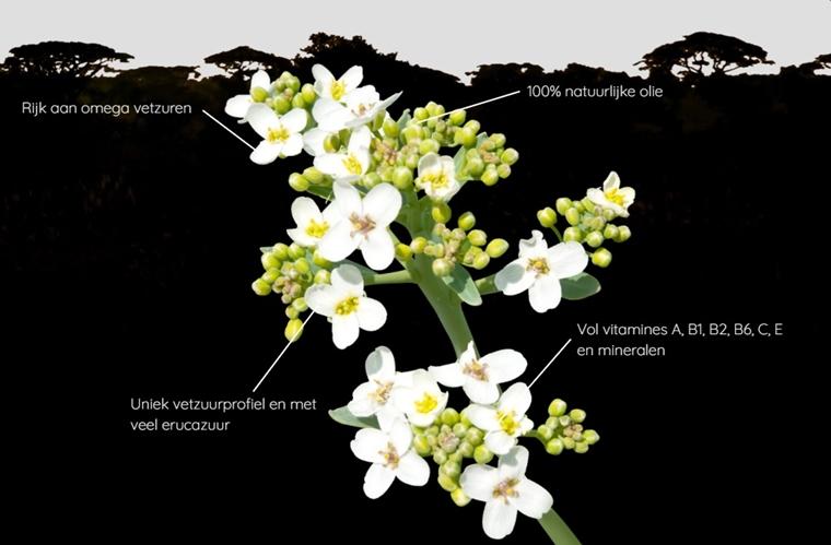abysk abessijnse olie 1 - Skincare | Abysk (abessijnse olie als wondermiddel tegen een droge huid)