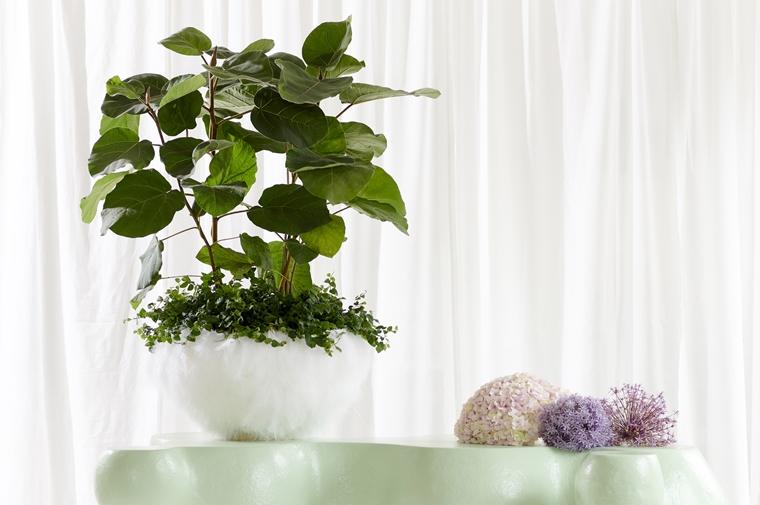 ficus verzorgen tips jngl 1 - Home | Welke ficus past bij jou?