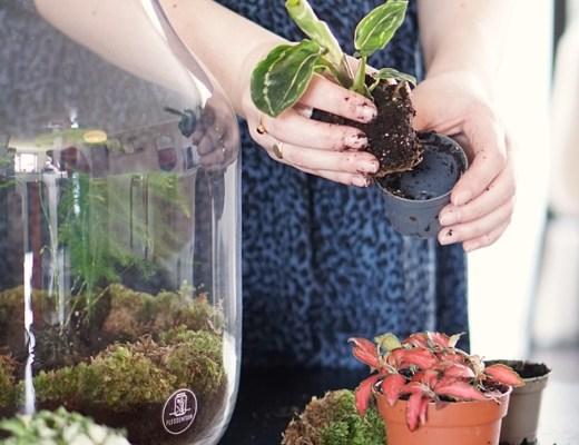 Flessentuin terrarium/ecosysteem webwinkel tip
