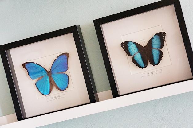 opgezette-vlinders-2