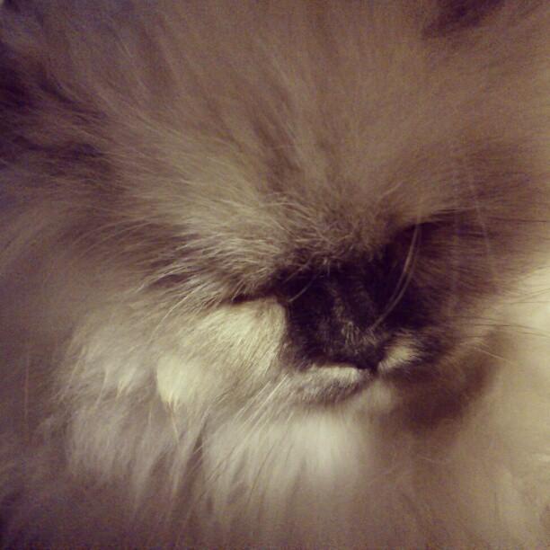 sassy2 - Meet Sassy!
